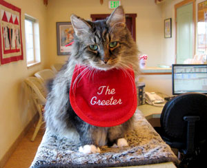 Vladimir, the greeter! ACGS Veterinary Clinic Corvallis, Oregon
