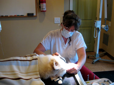 All Creatures Great and Small Vet Clinic, Corvallis, OR Dentistry