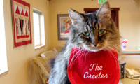 Vladimir the Cat, employee of All Creatures Great and Small Veterinary Clinic